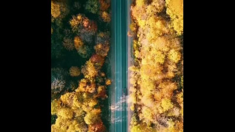 Абсолютное наслаждение не спеша ехать по новой Лаго Накской дороге среди такого шикарного осеннего леса 🍂