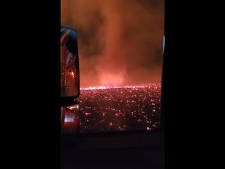 В Калифорнии на лесных пожарах появились огненные торнадо