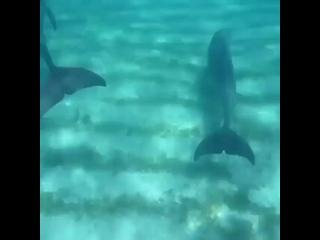 Дельфины Доминикана.mp4