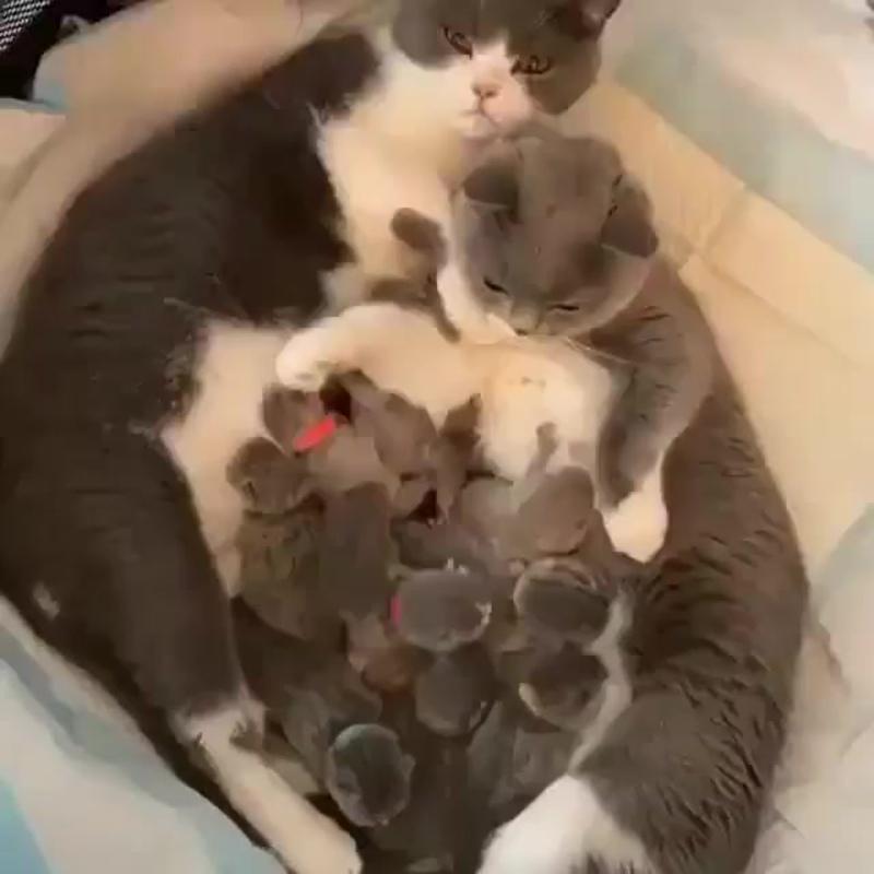 Да это же две кошки, Кормят котят..