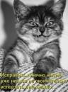 Фотоальбом Александра Дроздецкого