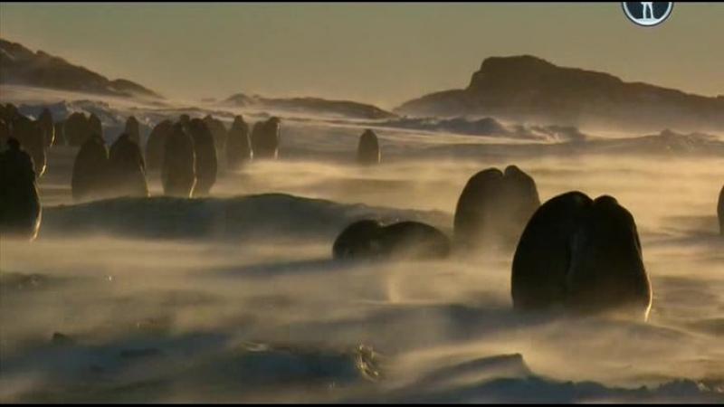 BBC Пингвины Шпион в стае 1 серия Путешествие