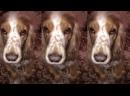 Мире Животных поющая собака ,Собака поет. Музыкальные собаки