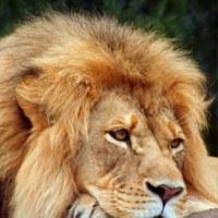 Лев Мирный