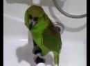 Поющий попугай - Беловежская пуща