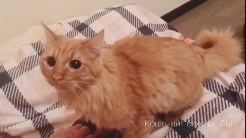 Котик Беня. Кошачий психолог GM