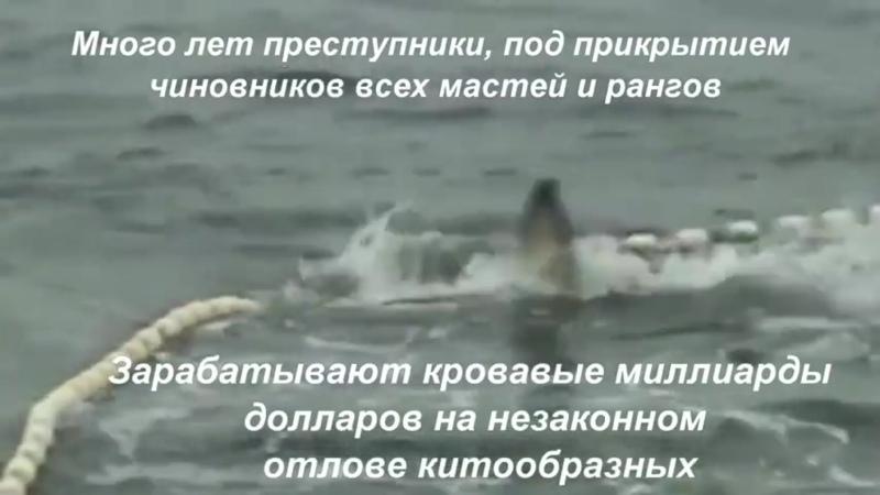 Видео от Елены Анопочкиной
