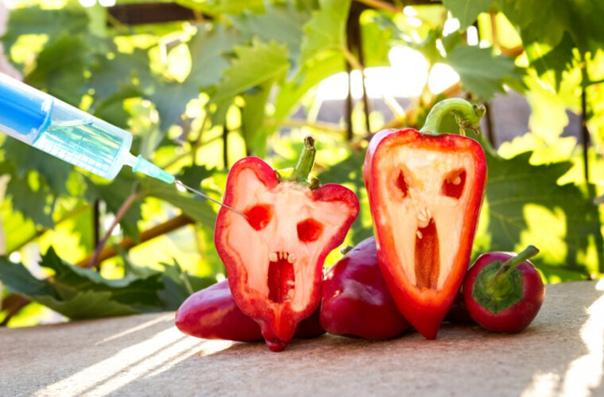 Что несут нам ГМО?