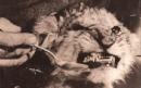 Фотоальбом Славы Ферояна