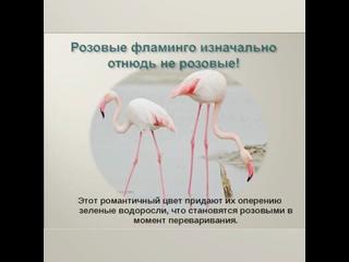 Тимирязевский СДК «Наши пернатые друзья»