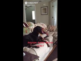 Кажется, эта собака пытается что-то сообщить