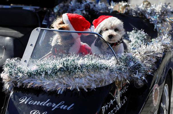 Собаки в костюмах Санта-Клауса перед парадом рождественских игрушек
