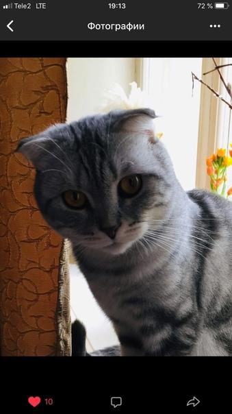 Пропал кот 4 октября в районе Люберцы пос, Калинин...