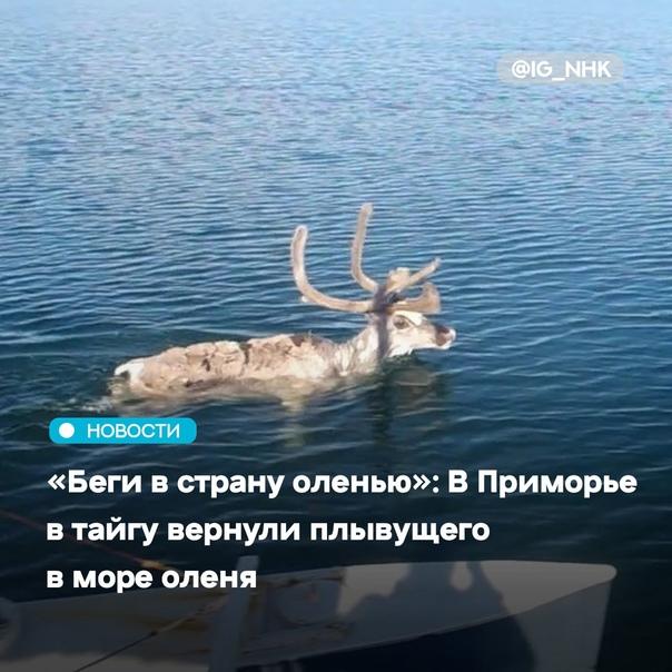 В Приморье в родную стихию отпустили пятнистого ол...