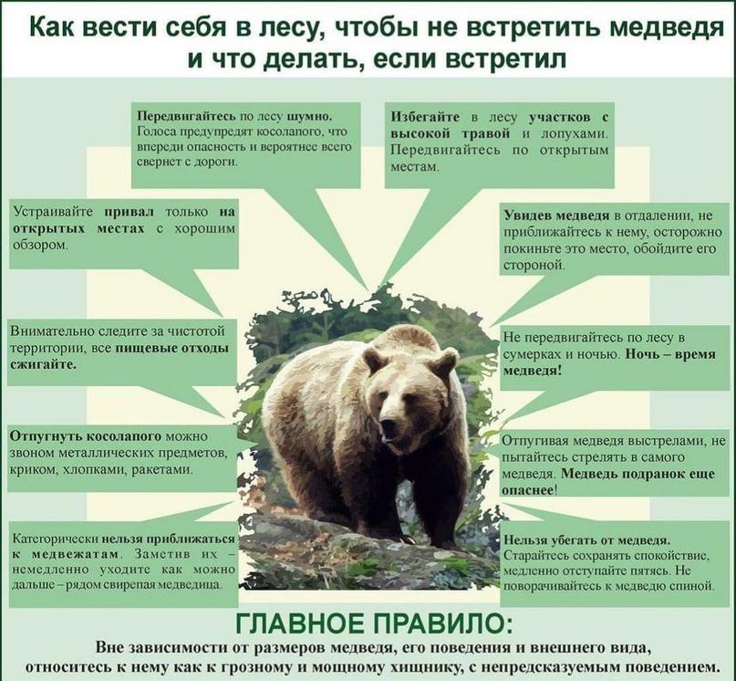 Рекомендации при встрече с медведем