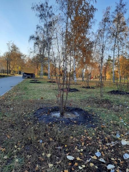 Подход к озеленению Омска собираются изменить.Тако...
