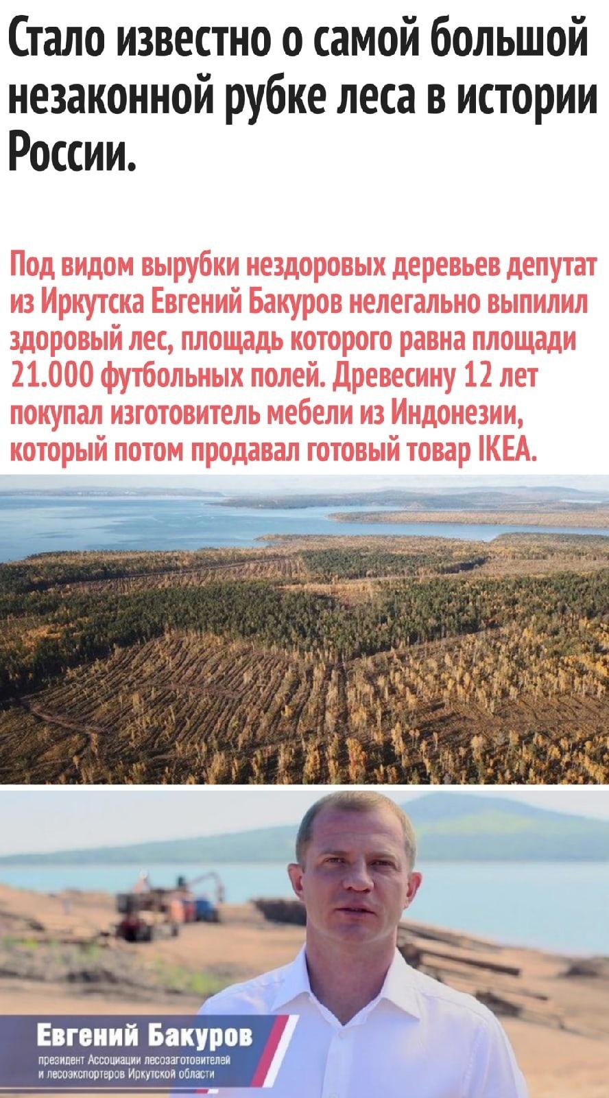 Депутат оказался замешан в незаконной вырубке леса