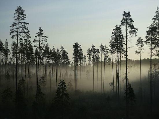 «Хана тебе»: в Бурятии вальщики леса убили товарища, чтобы скрыть бытовое насилие  Стали известны подробности одного... [читать продолжение]