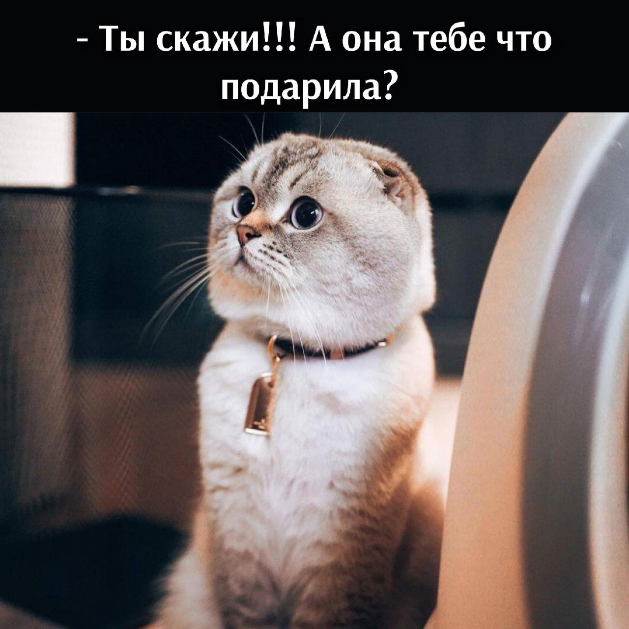 - Барсик, и что