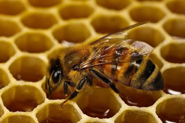 Продам 6 пчелиных семей с ульями(на 14 рамок), всё...