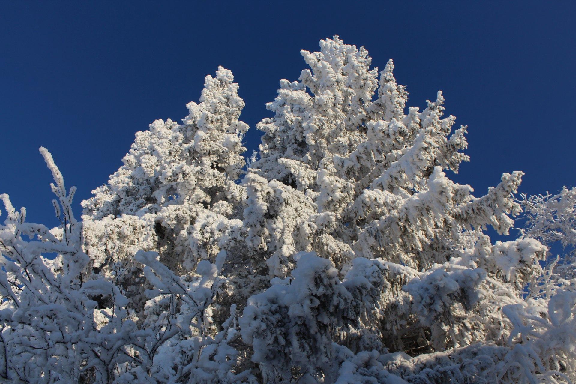 ❄С первым днем зимы! [https://vk.com/galarasl|https://vk.com/galarasl]#Удмуртия #Можгинскийрайон