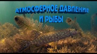 Как Атмосферное давление влияет на рыб