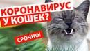 КОРОНАВИРУС У КОШЕК 🌡 Кот чихает много раз 😹