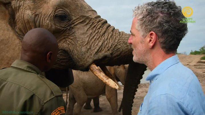 BBC Знакомство со слонами 1 серия Познавательный природа животные 2016