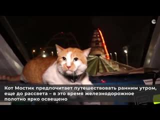 Как кот Мостик по Крымскому мосту путешествовал