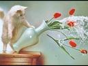 😸 Коты- хулиганы! 🐈 Подборка приколов с котами для хорошего настроения! 😸