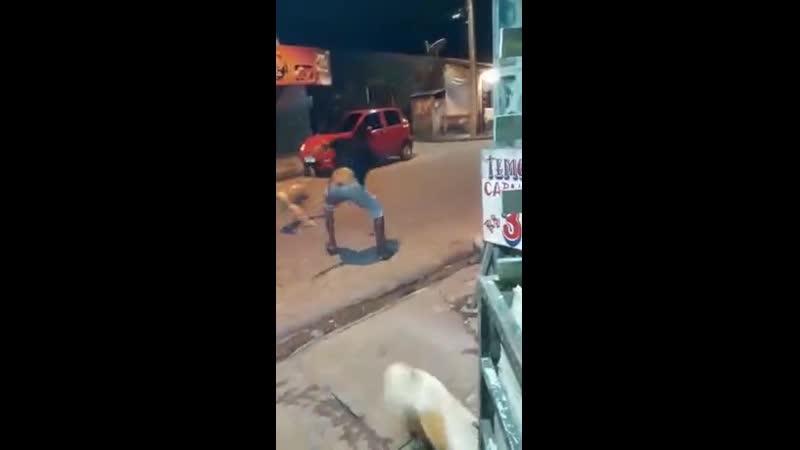 Собачий боец