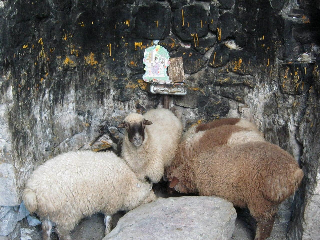 церковь помогает животным