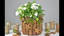 DIY - Christrose dekorieren mit Fichtenzapfen, Moos I Tischdeko für Weihnachten und Winterzeit I