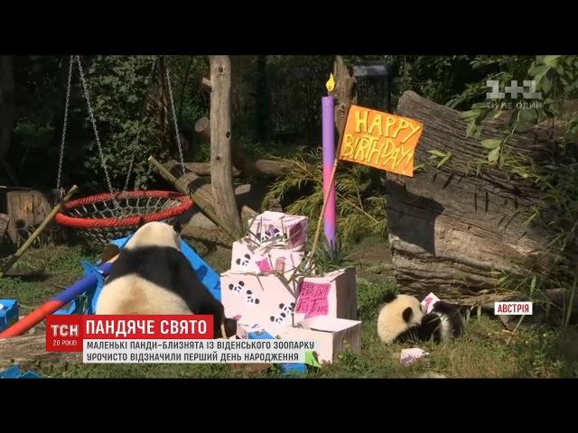 У Віденському зоопарку відзначили день народження панд близнят